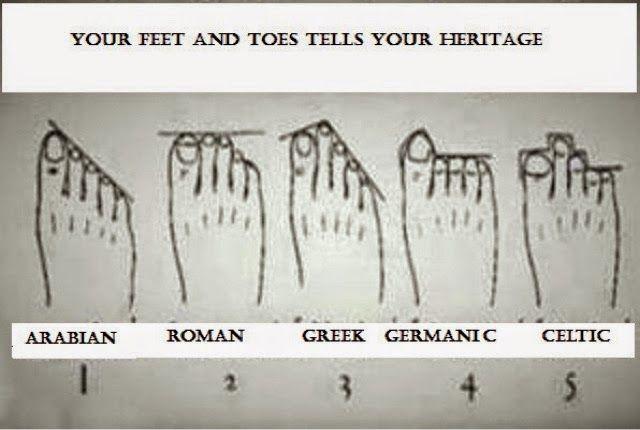 هناك دراسة ناقشتها جين شيهان من صحيفة التلغراف البريطانية تقترح الدراسة أن شكل أصابع القدم تبين جذورنا ومن أين Told You So Toe Ancestry The More You Know