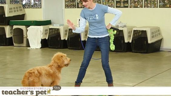 Impulse Control With Games Teacher S Pet With Victoria Stilwell