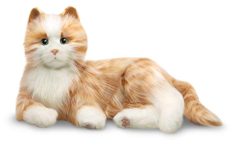 Companion Pet Cat Random Stuff That S Awesome Orange Tabby