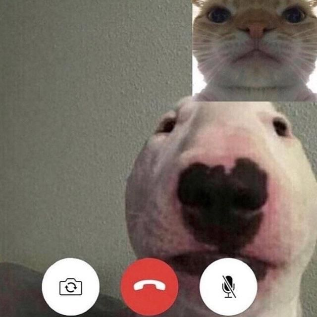 Face time Funny memes, Bull terrier funny, Stupid memes