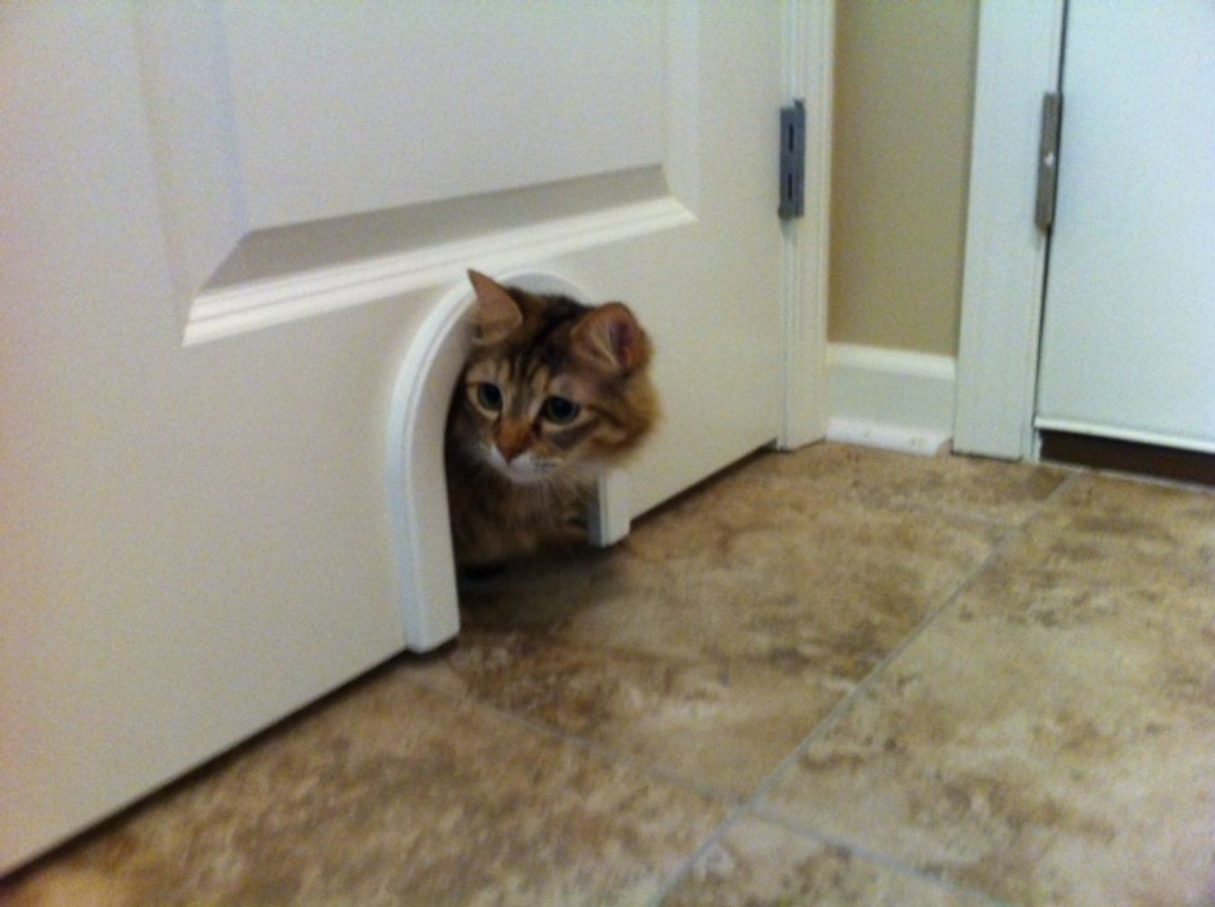 Delivered cat door for laundry room cat - Interior door with pet door installed ...
