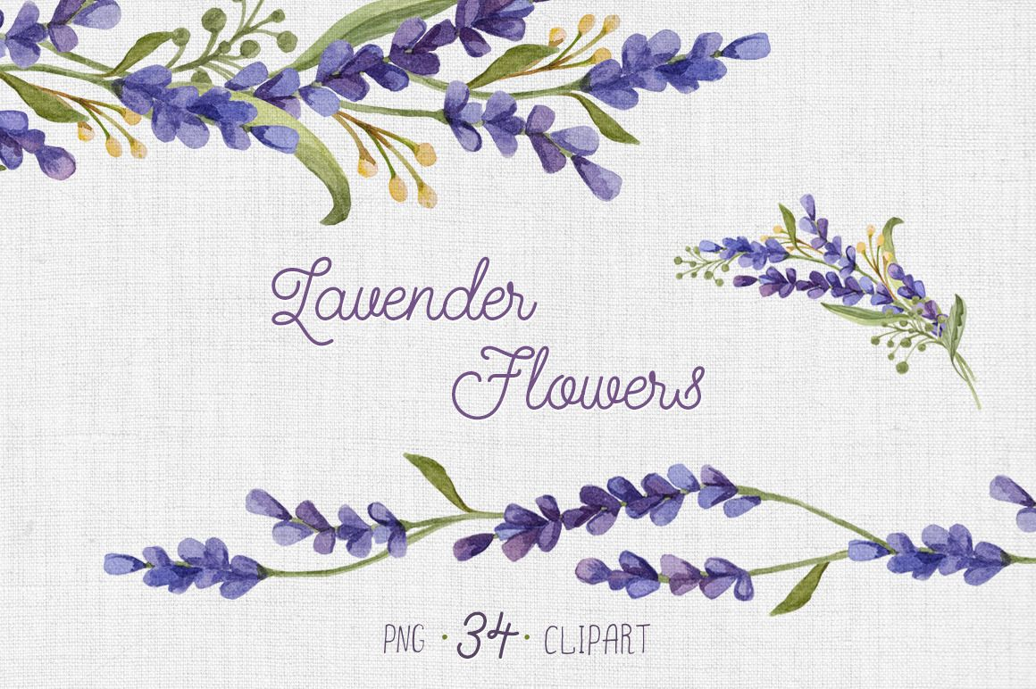 Watercolor flowers png clipart illustrations on creative market - Watercolor Set With Lavender Flowers By Nataliva On Creative Market