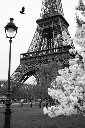 Image Detail For Eiffel Tower In Black And White Style Paris France Stock Photo The Tiffany Room