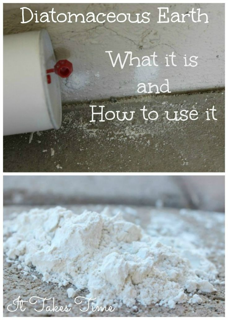 Diatomaceous Earth What It Is and How to Use It