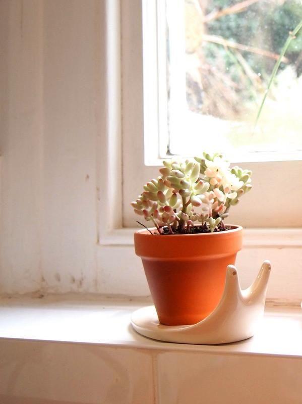 Mini Terracotta Plant Pot With Snail Saucer Terracotta Plant Pots Plants Potted Plants