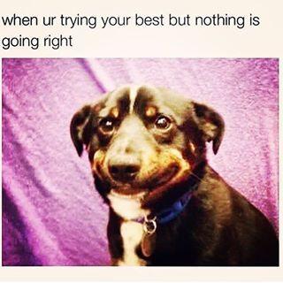 Dog Meme Fake Smile Google Search Funny Pictures Funny Memes Animal Memes