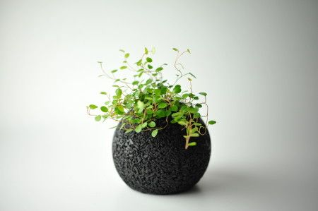 """""""eco pochi"""" -plant in japanese charcoal, is the best to absorb room odors. so cute"""