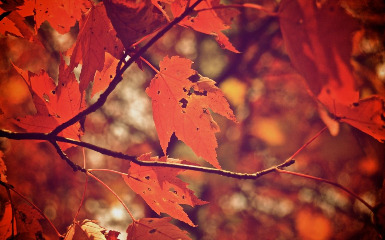 5 reasons why fall is awesome