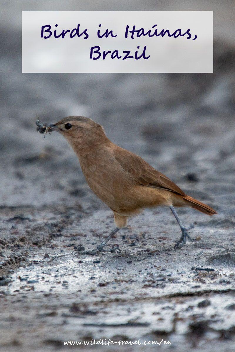 Pin Auf Birds Of The World