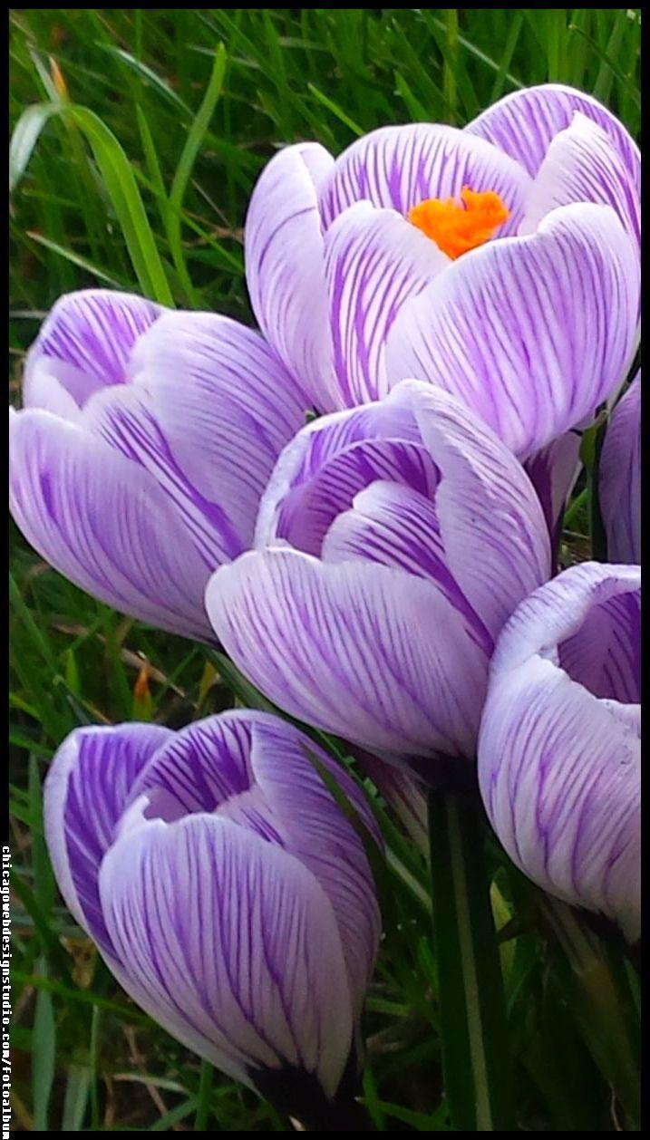 Kwiaty Wiosenne Obrazki