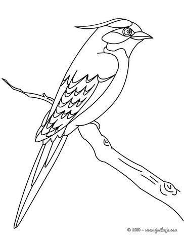 Dibujo para colorear : un HERMOSO PAJARO | ACUARELAS | Pinterest ...