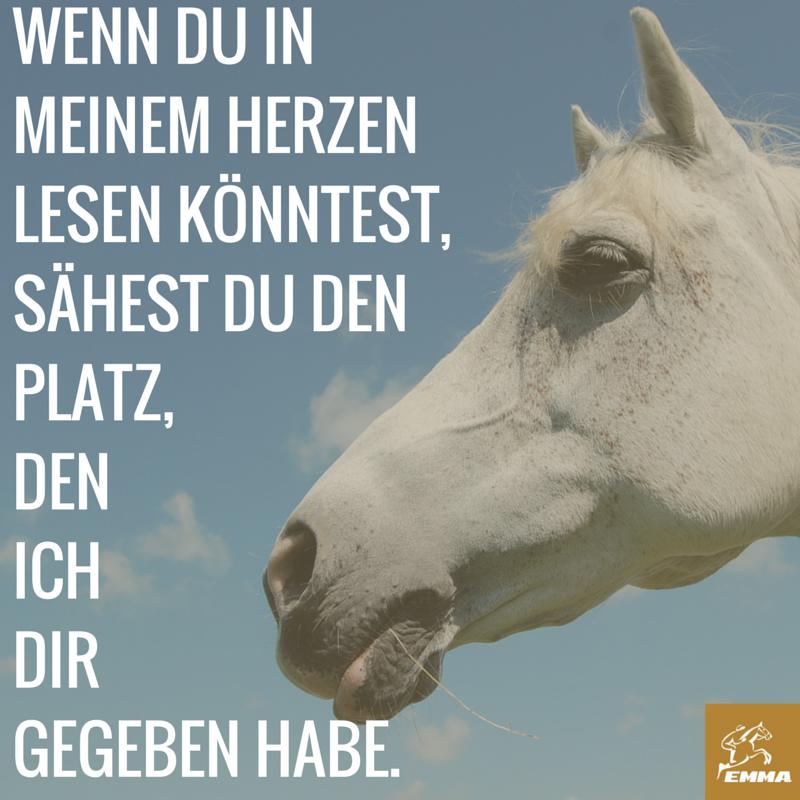 Pferdesprüche & Pferd hustet-emma-pferdefuttershop.de ...