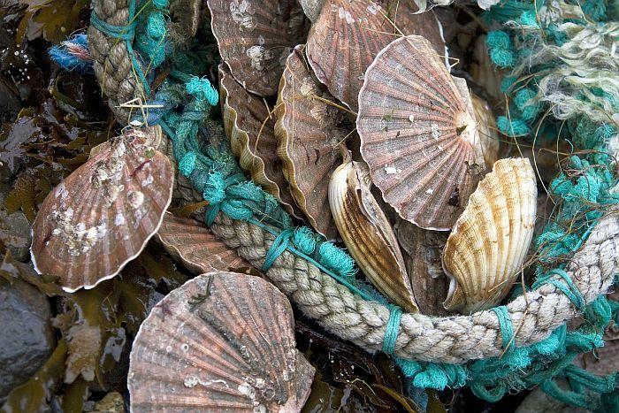 Fisch und Meeresfruechte Schottland, zubereitet von Fife Food Ambassador Christopher Trotter, fotografiert von seiner Frau.