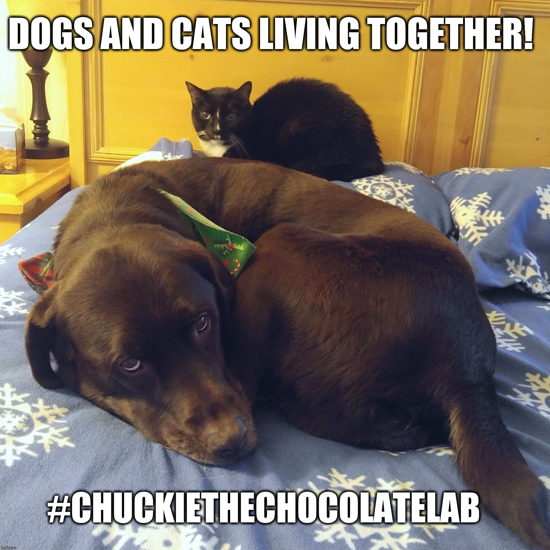 Dogs And Cats Living Together Dogs Dog Cat Cat Memes