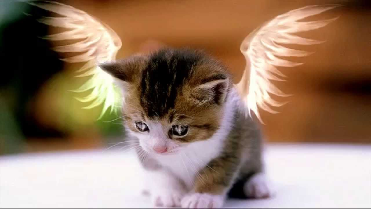 Cats Pictures Free Download Cat Pic 3 Pics Of Cute Cats Cute