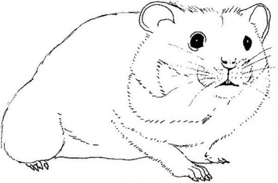 Humphrey | Coloring Pages | Pinterest