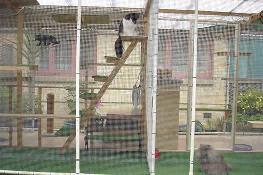 Large Outdoor Cat Enclosure | Outdoor Cat Play Area photos