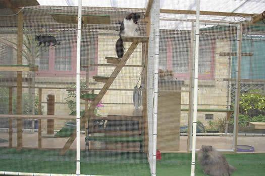 Large Outdoor Cat Enclosure | Outdoor Cat Play Area photos
