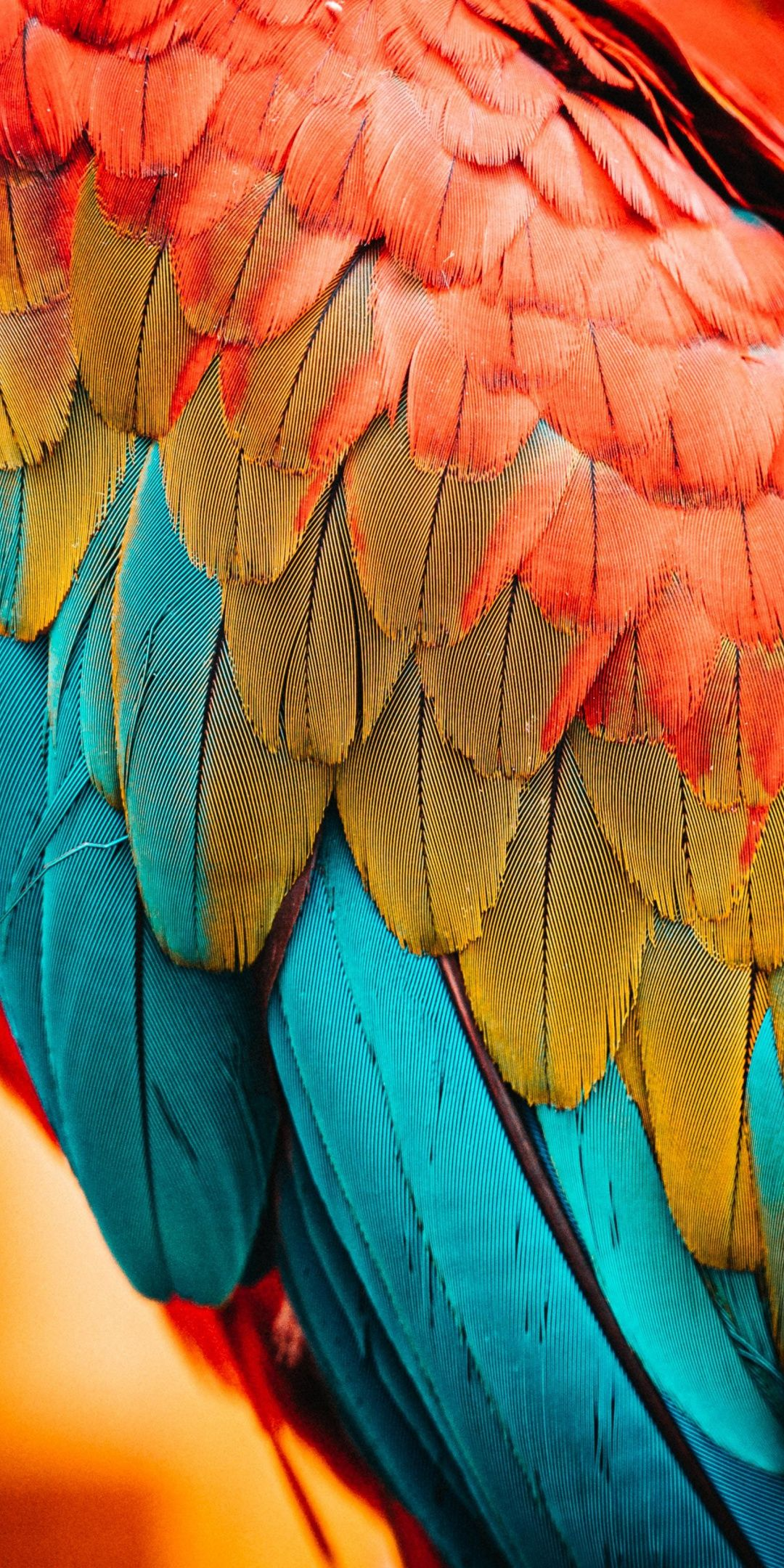 1080x2160 Colorful feathers, parrot, birds, close up