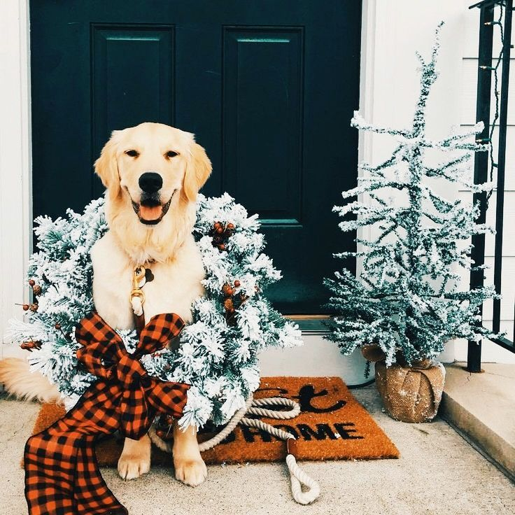 Pin by ↠ 𝚁𝚢𝚗 𝙷𝚞𝚗𝚝𝚎𝚛 ↞ on puppy love♡ Christmas dog