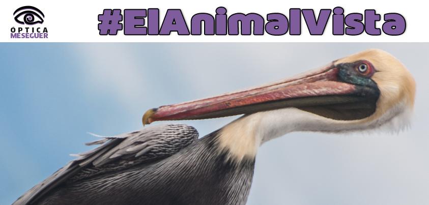 Vuelve #ElAnimalVista, esta semana con una especia cuyos ojos esconden una de las historias más trágicas de la naturaleza. Dinos que de que especie estamos hablando y te contaremos esa historia.