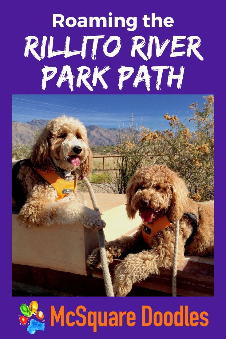 Roaming The Rillito River Park Path Dog Friendly Arizona Dog
