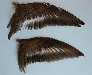 met deze echte vogel vleugel heb ik gekeken naar hoe de veren over elkaar heen lopen.