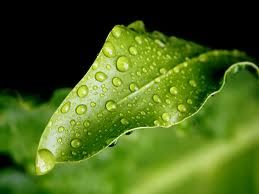 A Leaf With Water Nature Pinterest Rain Drops And Mother Nature
