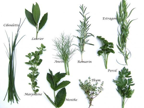 Plantes aromatiques recherche google plantes jardins - Plantes aromatiques cuisine ...