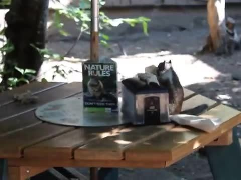 Squirrel Stuffs Mouth With Napkins   Watch the video - Yahoo! Screen
