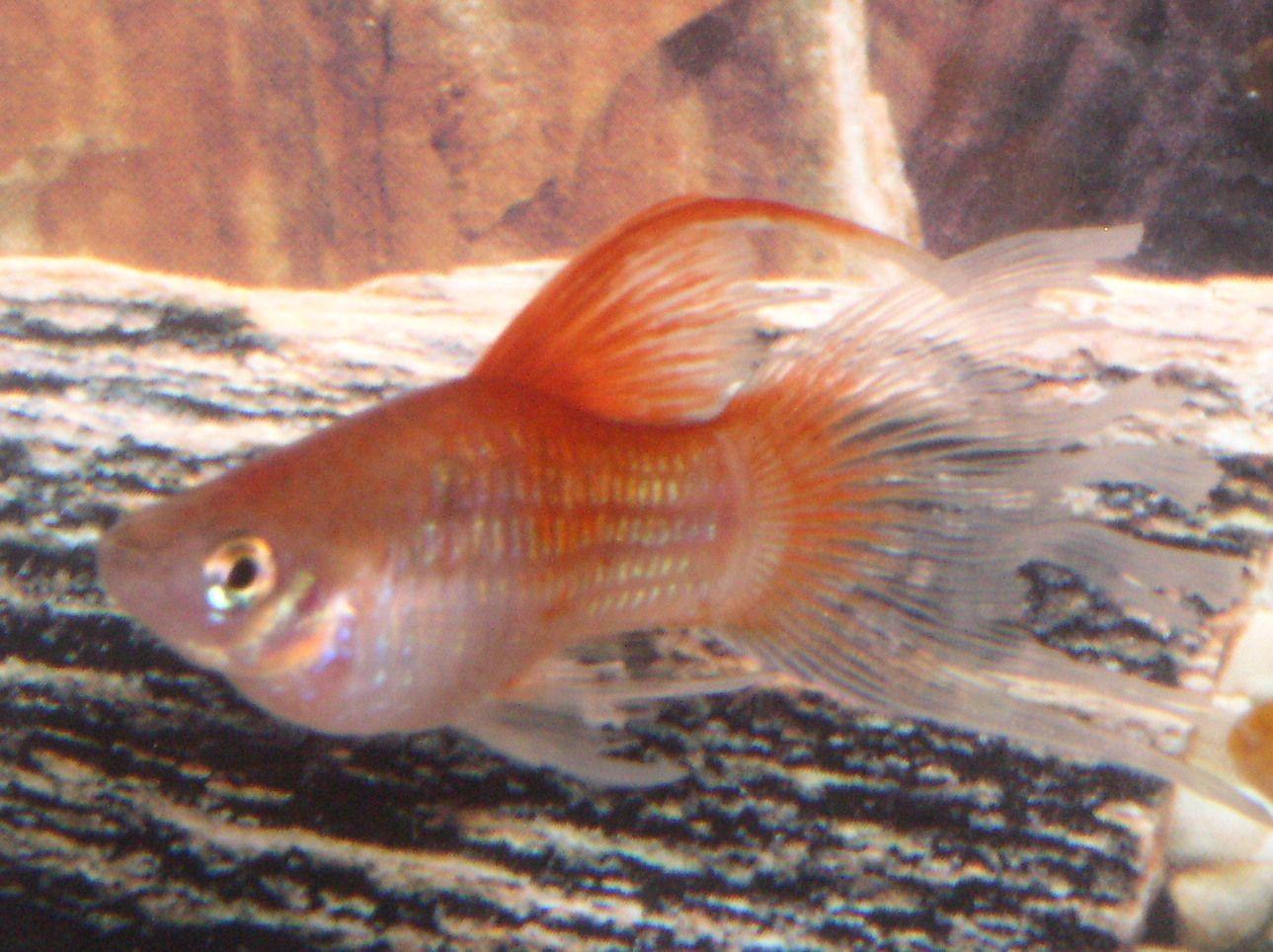 Ugly freshwater aquarium fish - Explore Freshwater Aquarium Aquarium Fish And More