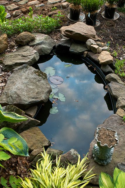 Loving the garden pond in the garden ponds for small for Small garden with pond design