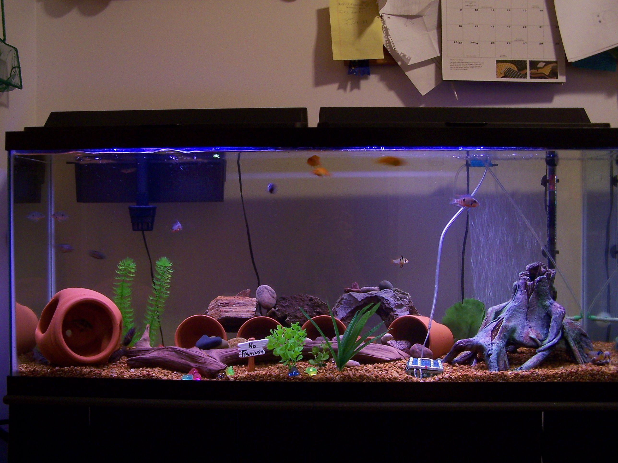 Aquariurm Setup For Cichlids 55 Gallon Cichlid Aquarium