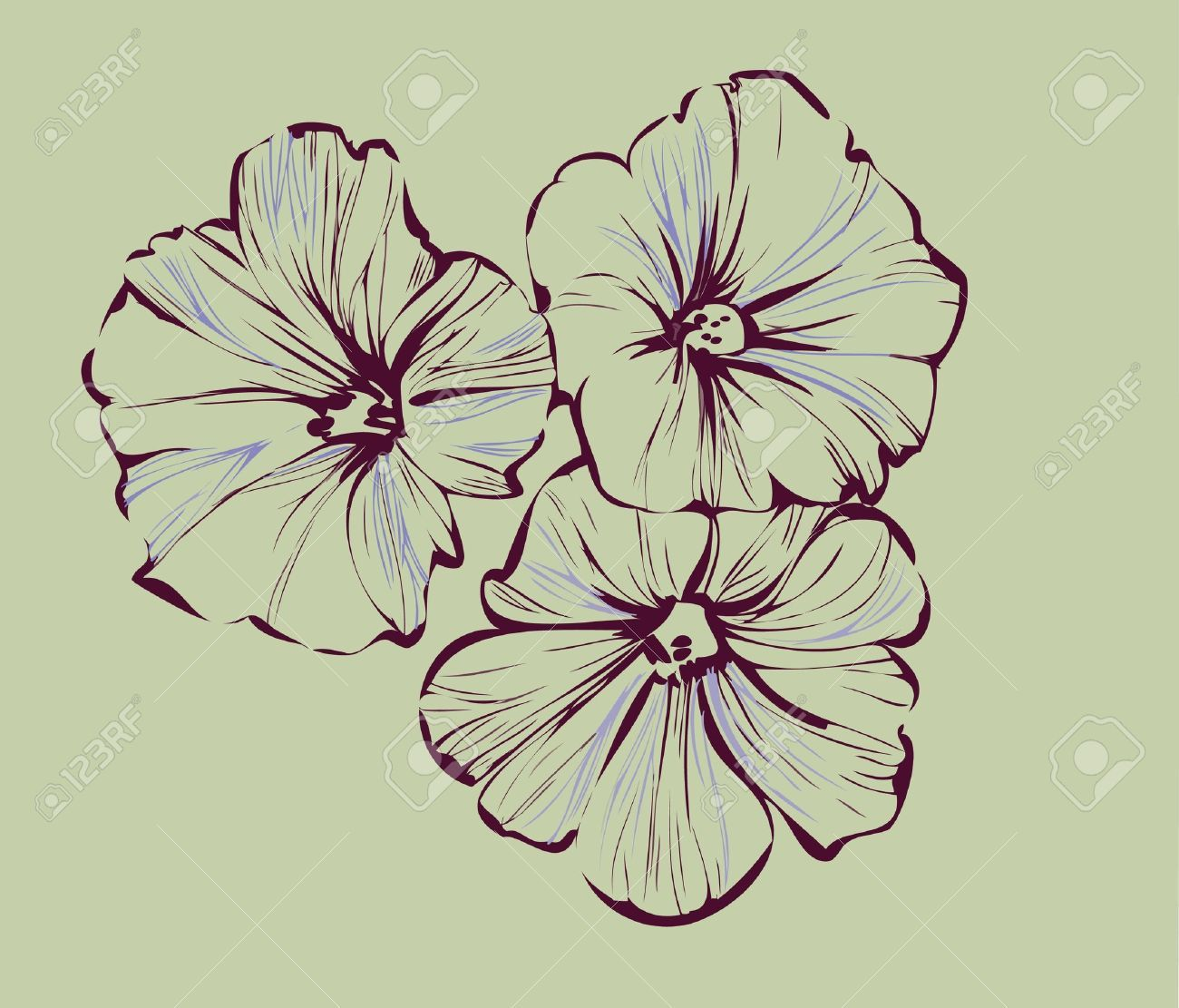 Morning Glory Stock Vector Illustration And Royalty Free Morning Glory Clipart Morning Glory Tattoo Birth Flower Tattoos Aster Tattoo