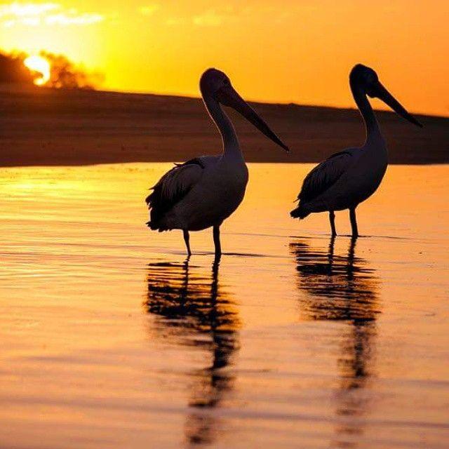 Enjoying the sunset at the Sunshine Coast