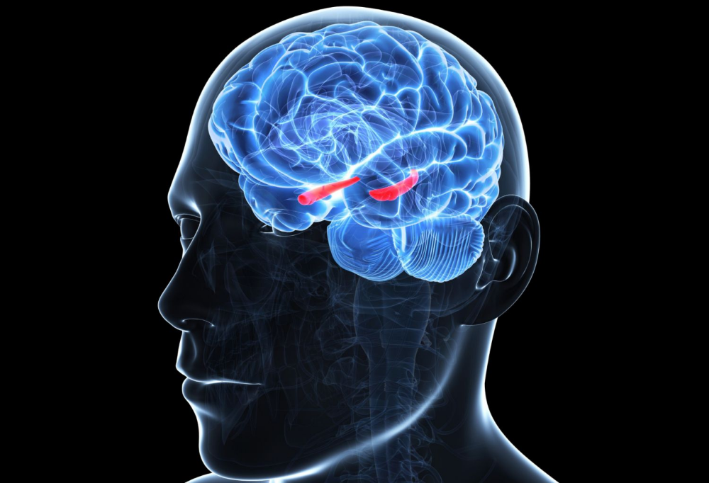 Do You Have Stellar Memory? It May Be Your Hippocampus ...