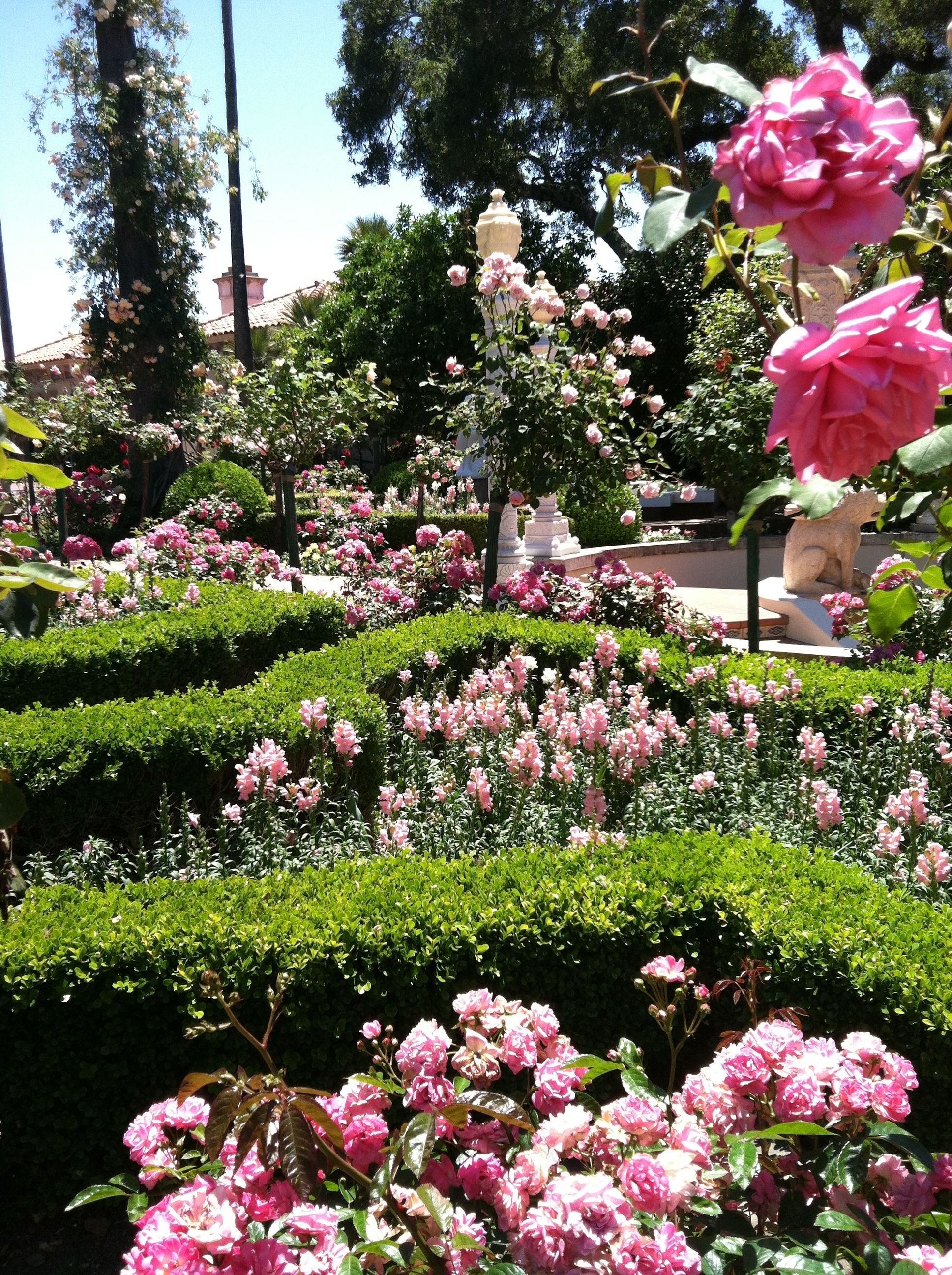 Beautiful Flowers at Hearst Castle!! Amazing old world roses!!