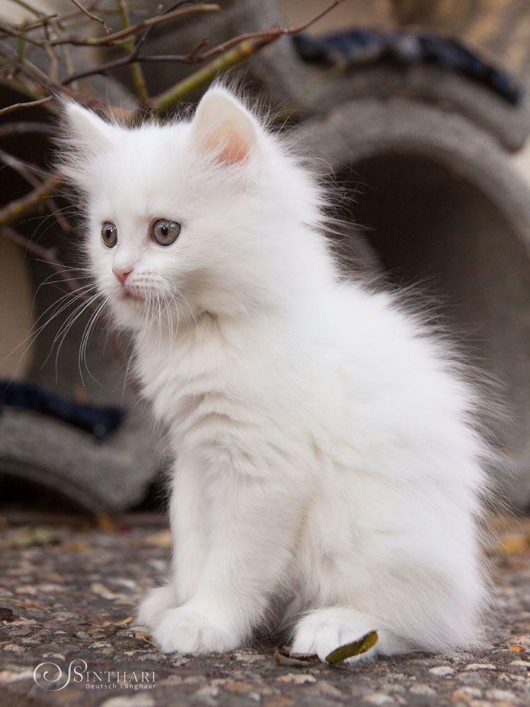 Pin Von Sharon Crowder Auf Cute Kittens Cats Baby Katzen