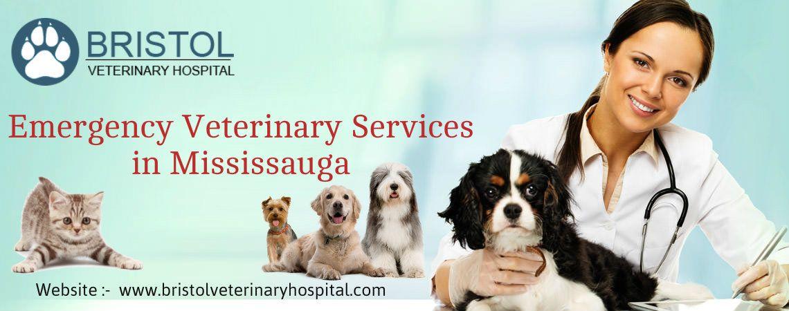 Bristol offers emergency vet services including dog, pets