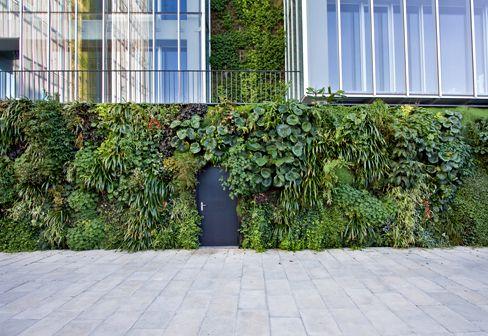 Lovely Outdoor Wall Garden
