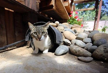 fun for your felines kitty emerges from underground tunnel in his rh pinterest com