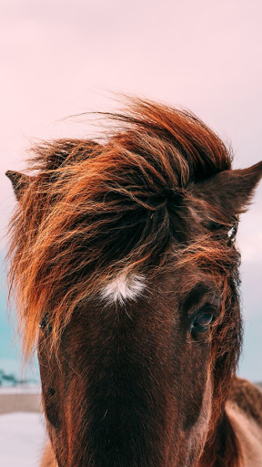 Beautiful Horse Iphone Wallpaper Horse Wallpaper Horses