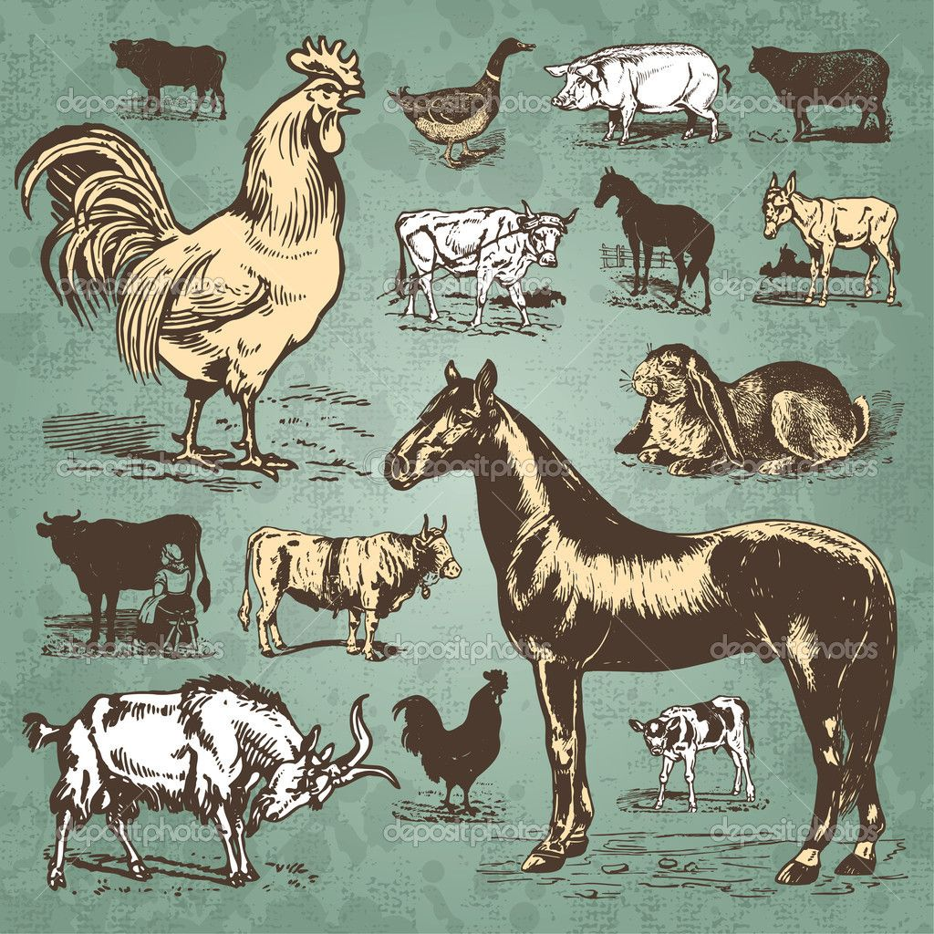 Illustration Of Vintage Farm Animals Set Vector Art Clipart And Stock Vectors