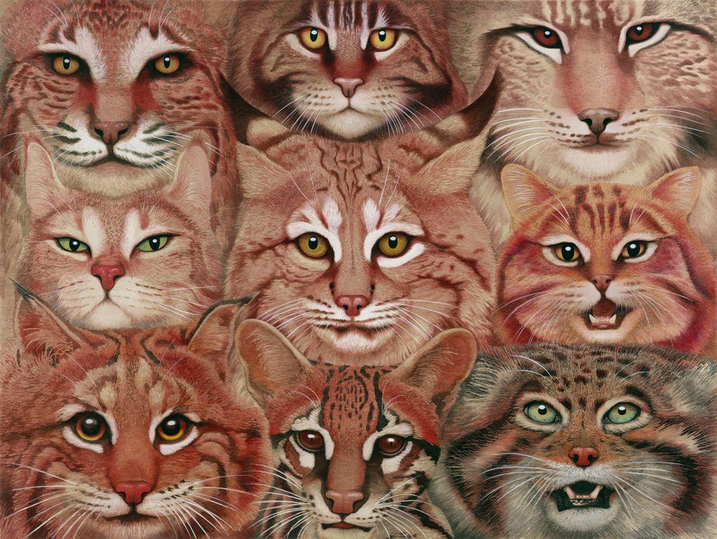 "Tiffany Bozic  Felidae, 18"" x 24"" horizontal, acrylic on maple panel, 2013 Apologies for those of you who have already seen this painting. I ju..."