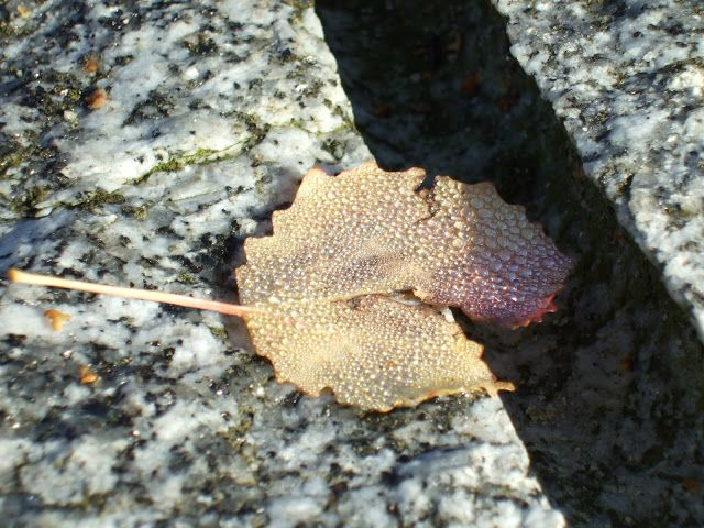 an attempt at macro photography with autumn leaves  Bilingual Blah Blah: Herbstblätter - ein Makro-Versuch