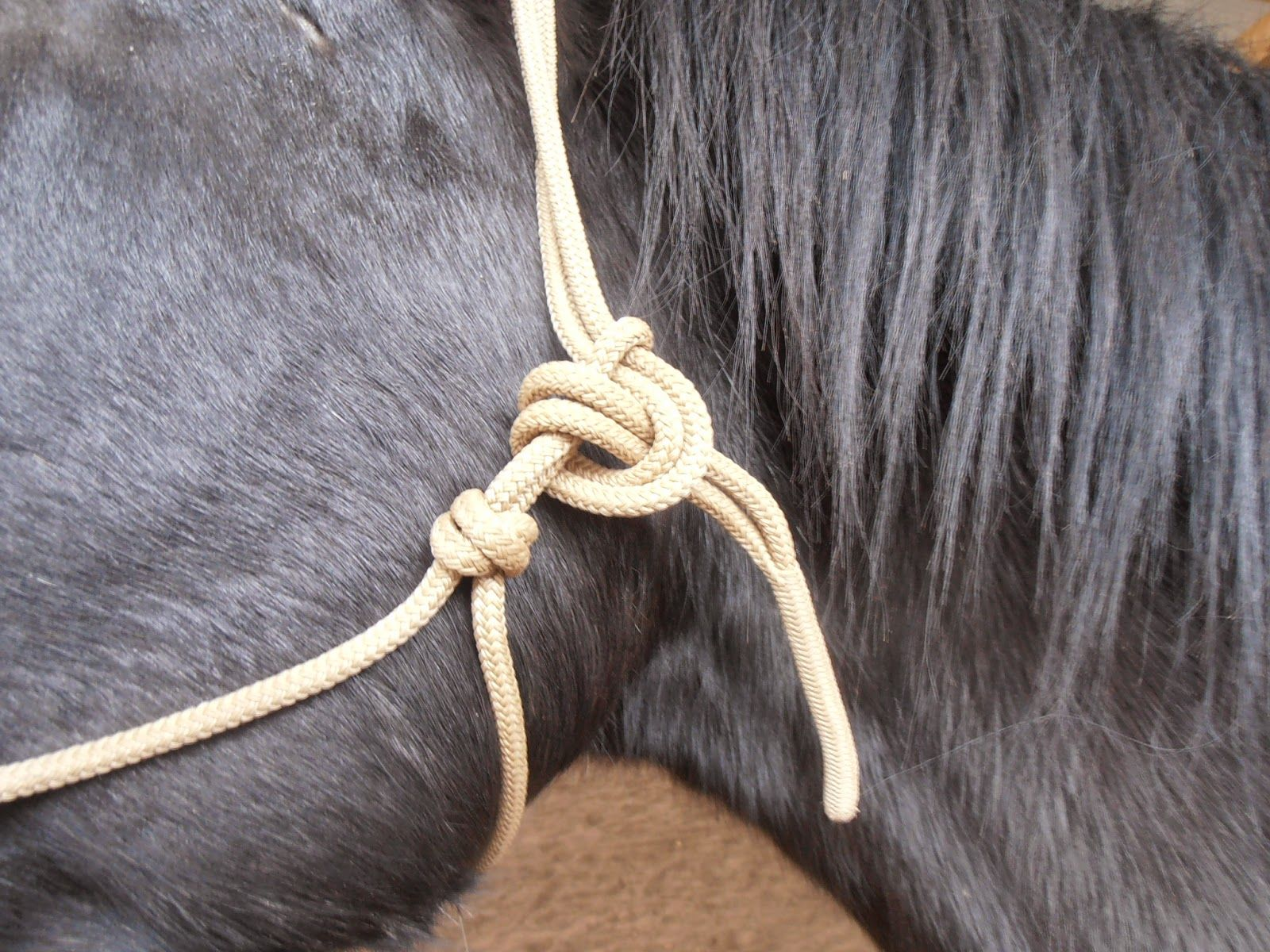 Knotenhalfterkunde, Pferde verstehen Blog