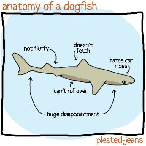 anatomy-of-a-dogfish