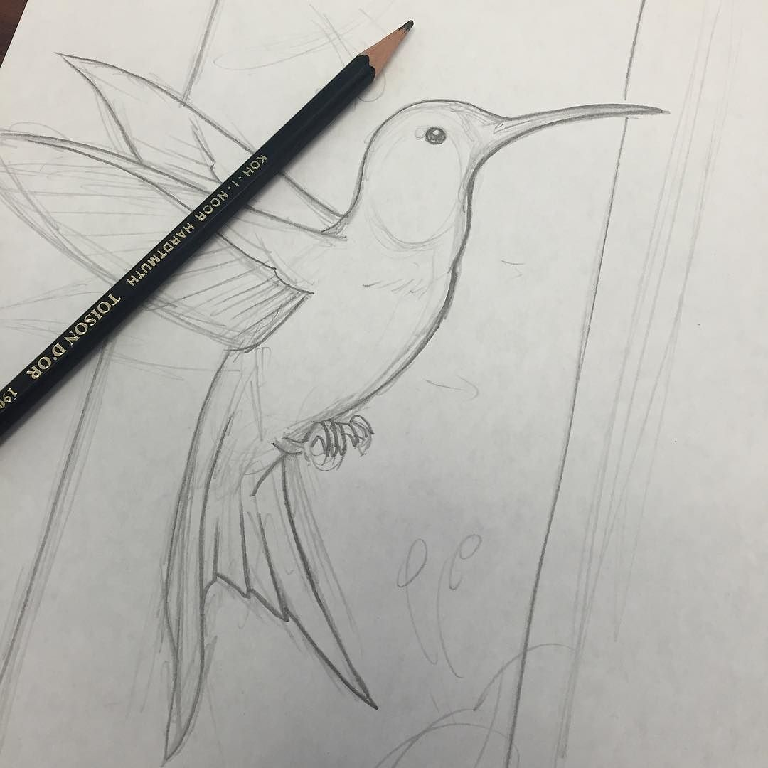 Another lunch break at the drawing boards! #illustration #drawing #draweveryday #lessonplans #kohinoor #kohinoorhardtmuth #hummingbird #fun #sketching #workinprogress #alittlebirdytoldme #shakeatailfeather #cute #birddrawing #birds #nature #art #arthard