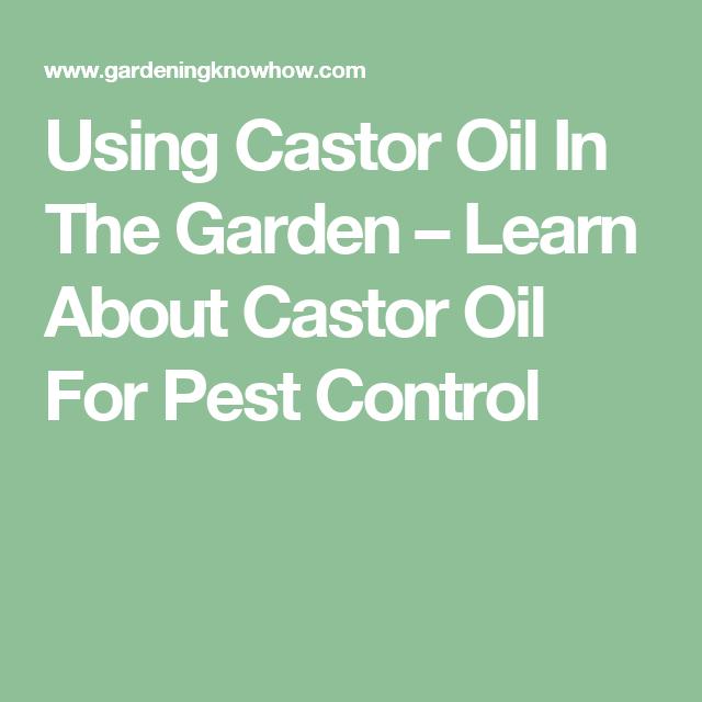 700c25330fea99031be233336358e5e3 - Is Castor Oil Safe For Vegetable Gardens