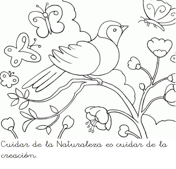 Pin De Karen Campos En Dibujos Dibujos De Aves Colibri Para Dibujar Colibri Dibujo